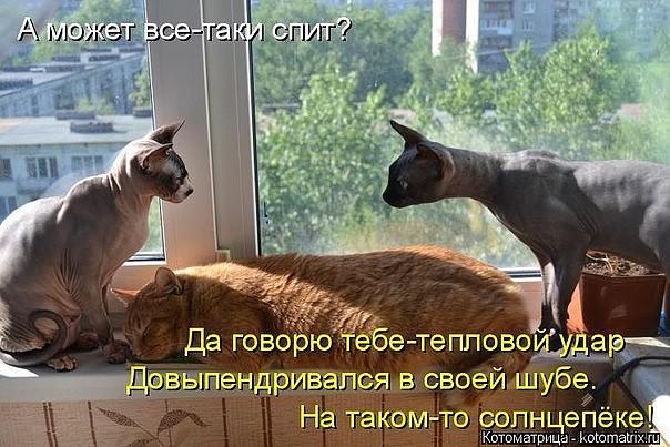 Сонник кот к чему снится кот во сне по соннику?