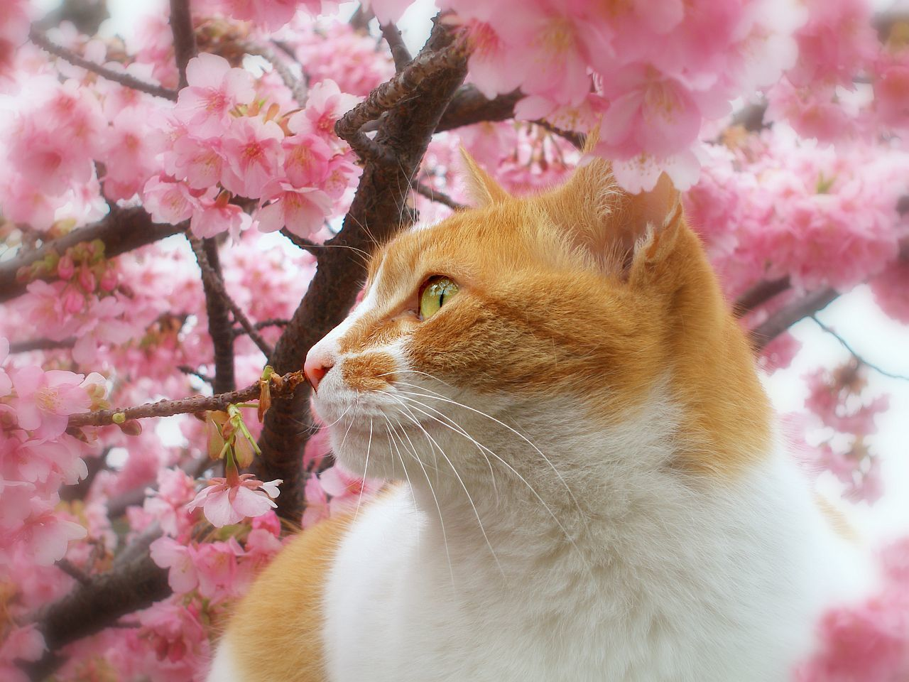 Картинки про весну и котят