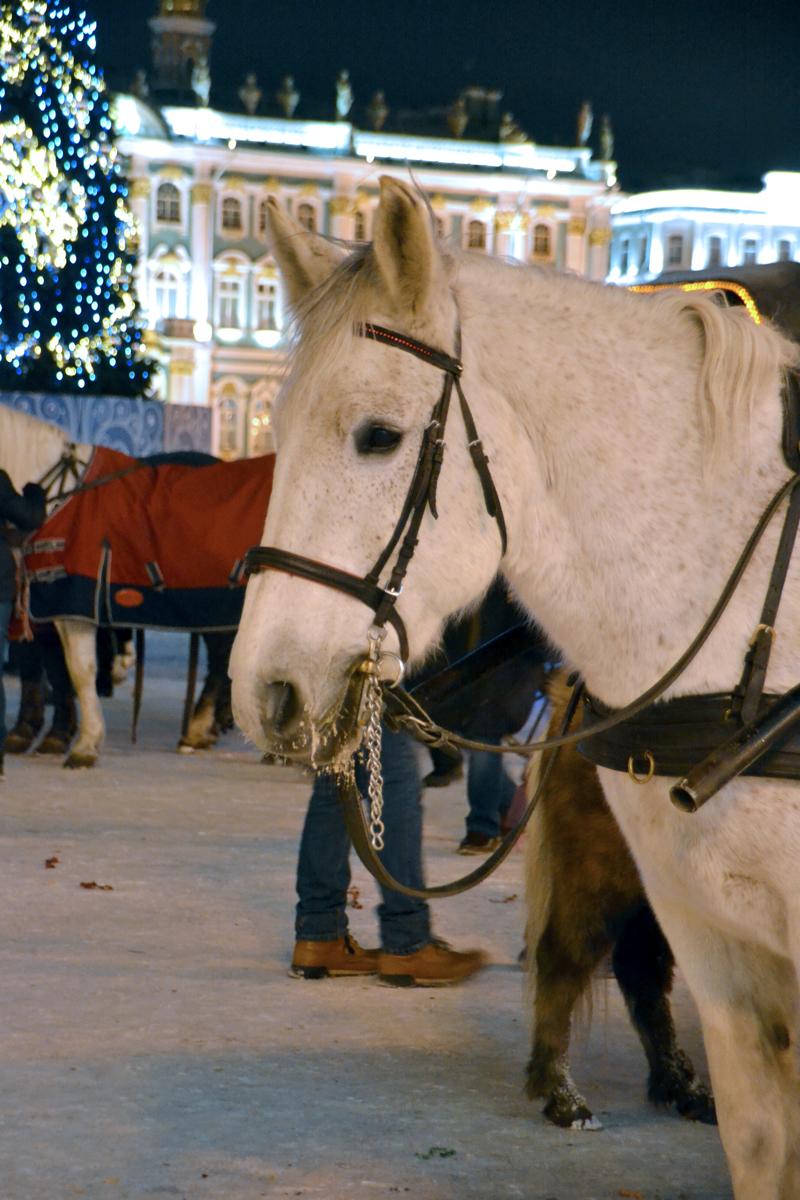 7. Мне очень нравятся лошади, могу фотографировать бесконечно.