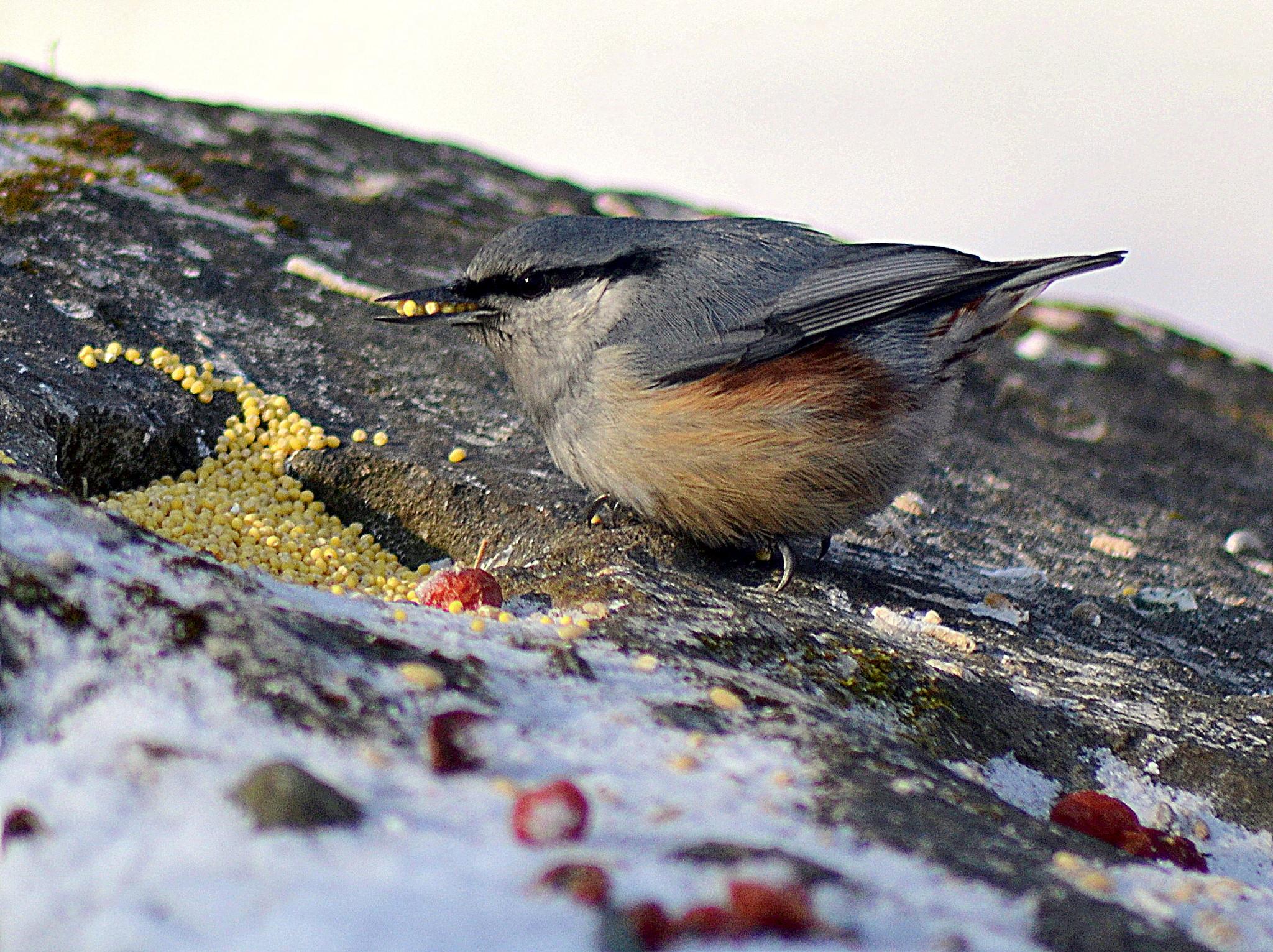 фото птиц приморского края выглядят